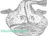 karina_bjerregaard_havtaske_monkfish