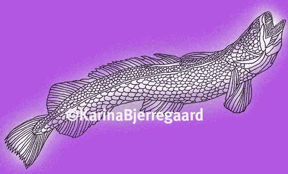 karina_bjerregaard_kulmule